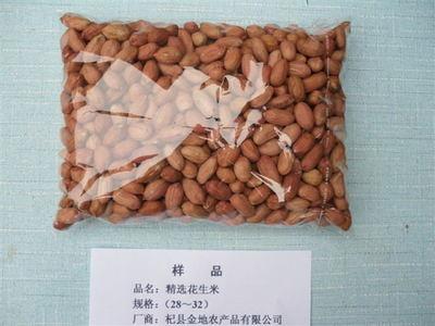 精选花生米样品规格(28-32)